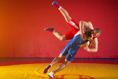 Two young men wrestlers. Two strong men in blue and red wrestling tights are wrestlng and making a suplex wrestling on a yellow wrestling carpet in the gym Royalty Free Stock Image