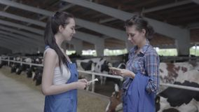 Two young pretty smiling female workers sharing money and shaking hands on the cow farm. Positive farmers get income. From the farm. The agriculture industry stock footage
