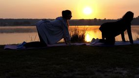 Two Women Are Shot in Profile on Their Fours Doing Yoga at Sunset in Slo-Mo. Two Young Sportive Women Stand on All Fours and Train Yoga Cat Exercise Breathing in stock footage