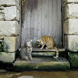 Two young striped cats sitting on the stairs of the old house Royalty Free Stock Photography