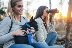 Two young women enjoying in forest hiking with their dog stock images