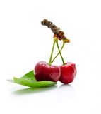 Two yummy cherries on the white background Stock Images