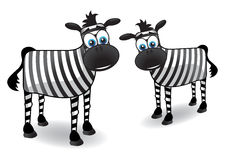 Two zebra. Two  cartoon zebras with blue eyes Royalty Free Stock Images