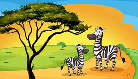 Two zebra under tree Stock Photo