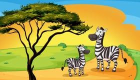 Two zebra under tree. Illustration of two zebra under the tree Stock Photo