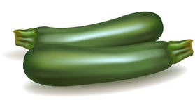 Two zucchini. Royalty Free Stock Image