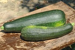 Two zucchini vegetable on wooden surface. Stock Photography