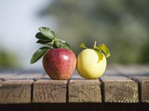 TwoApples Royalty Free Stock Photo
