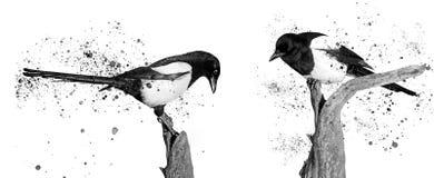Twoo黑白鸟和喷漆 库存图片