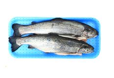 Twoo rainbow trouts. Isolated on the white background royalty free stock photo