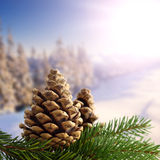 Twp pinecones and snow Royalty Free Stock Photography