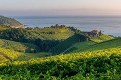 Txakoli vineyards with Cantabrian sea in the background, Basque Country, Spain stock images