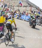 Żółty bydło na Mont Ventoux - tour de france 2013 Obrazy Stock