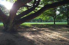 Ty czujesz mały lub drzewny właśnie dużego fotografia stock
