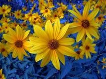 Żółty jasność Zdjęcia Stock