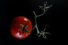 Ty mówisz Pomidor Zdjęcia Stock