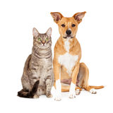 Żółty pies i Tabby kot Zdjęcia Stock
