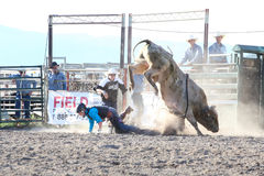 Ty Pozzobon PBR d'invitation images stock