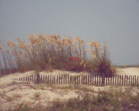 Tybee Island Royalty Free Stock Images