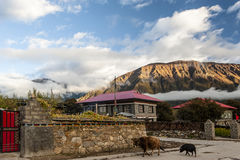 Tybet sceneria Zdjęcie Royalty Free