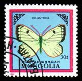 Tyche de Pale Arctic Clouded Yellow Colias, serie das borboletas, cerca de 1986 fotografia de stock