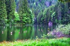 Tyck om sikten av den röda sjön Rumänien royaltyfri fotografi