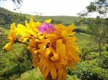 Tyck om skönheten av gula blommor med en trädgårdbakgrund och suddighet arkivfoto