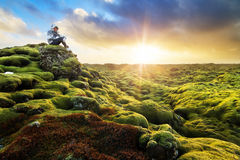 Tycka om Island Royaltyfri Bild