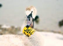 tydlig swan royaltyfri fotografi