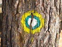 tydlig tree Arkivbild