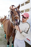 tygelfits ansar hästen Royaltyfri Bild