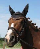 Tyglad häst Arkivbild
