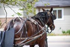 Tyglad häst vid vägen royaltyfria bilder