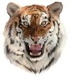 Tygrysów warczenia Fotografia Royalty Free