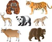 Tygrys, Duży kot od Azjatyckiej dżungli - Wektorowa ilustracja ilustracja wektor