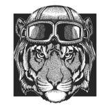 Tygrys, dziki kot jest ubranym lotnika kapelusz Druk dla dzieci odziewa, trójnik, koszulka Pilotowy dzikie zwierzę zdjęcia royalty free