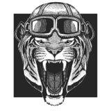 Tygrys, dziki kot jest ubranym lotnika kapelusz Druk dla dzieci odziewa, trójnik, koszulka Pilotowy dzikie zwierzę obrazy stock