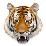 Tygrys głowy ręki remis i farba kolor odizolowywaliśmy ilustrację ilustracji