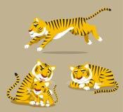Tygrys ustawia 2 Zdjęcie Royalty Free