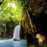Tygrys w dżungli Fotografia Royalty Free