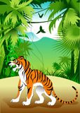 Tygrys w dżungli Zdjęcie Stock