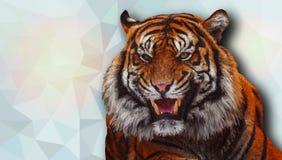 Tygrys w niskim poli- stylu również zwrócić corel ilustracji wektora royalty ilustracja