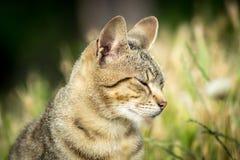 Tygrys wzorzystości bezpański kota obsiadanie w trawie i pozować Zdjęcia Stock