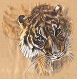 Tygrys z ekspresyjnym spojrzeniem Rysujący z barwionymi ołówkami ilustracja wektor