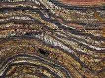 Tygrysa żelaza zawijas Obraz Stock