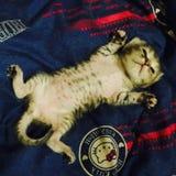 Tygrysi dziecko kot zdjęcia royalty free
