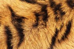Tygrysi futerkowy tło Zdjęcia Royalty Free