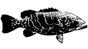 Tygrysi grouper ryba wektor royalty ilustracja