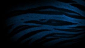 Tygrysi oddychanie Przy nocy zbliżeniem zbiory