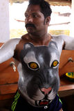 Tygrysi tana korowód Obrazy Stock